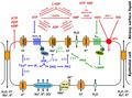 Diagram_Ion_Channel_modelSMALLer1